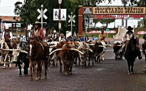 Long horn cattle drive at the Stockyards in Fort Worth, Texas