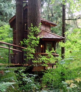 A Tree House at the Tree House Point